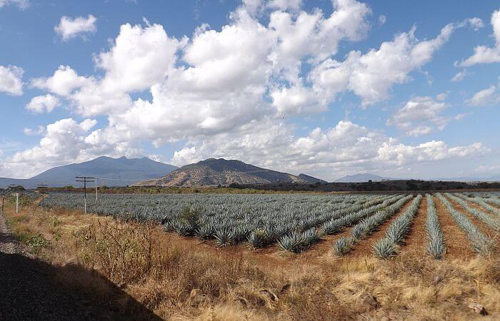 Driving in Mexico, the Making of Tequila, and Trusting a Stranger in Morocco